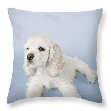 Cocker Spaniel Throw Pillow by David DuChemin