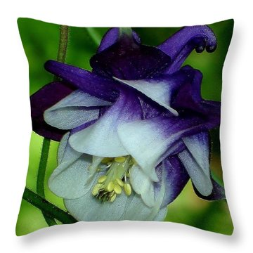 Throw Pillow featuring the photograph Columbine Flower by Katy Mei