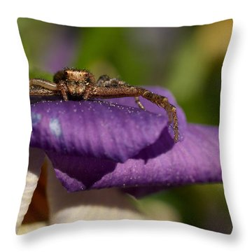 Crab Spider In A Violet Throw Pillow by Jouko Lehto