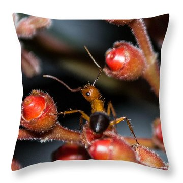 Curious Ant Throw Pillow by Shannon Harrington