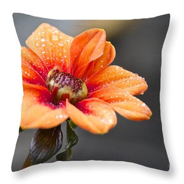 Dahlia In The Mist Throw Pillow by Sean Griffin