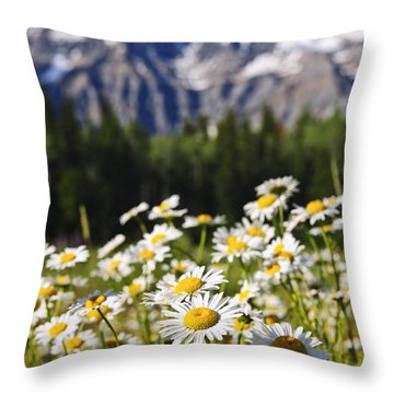 Daisies At Mount Robson Provincial Park Throw Pillow by Elena Elisseeva