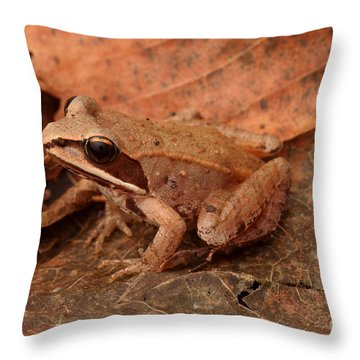 Eastern Wood Frog Throw Pillow by Ted Kinsman