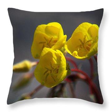 Desert Evening Primrose Throw Pillow by Joe Schofield