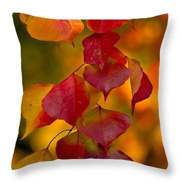 Throw Pillow featuring the photograph Fall Color 1 by Dan Wells