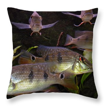 Throw Pillow featuring the photograph Fish by Colette V Hera  Guggenheim