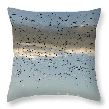 Flock Of Cowbirds Molothrus Ater Throw Pillow