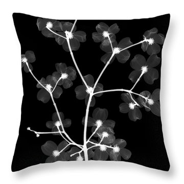 Flowering Dogwood X-ray Throw Pillow by Ted Kinsman