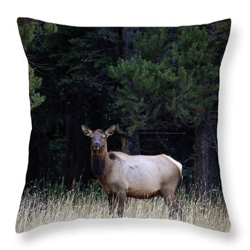 Throw Pillow featuring the photograph Forest Elk by Steve McKinzie
