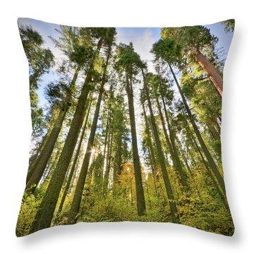 Forest Of Light Throw Pillow