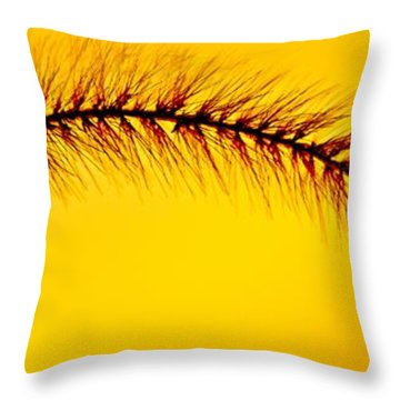 Giant Foxtail In Gold Throw Pillow by Jim Finch