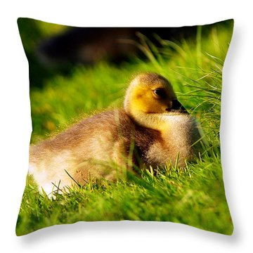 Gosling In Spring Throw Pillow by Paul Ge