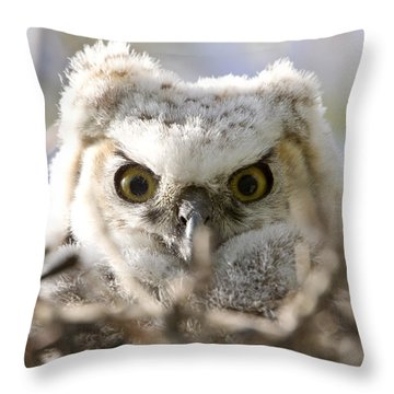 Great Horned Owl Babies Owlets In Nest Throw Pillow by Mark Duffy