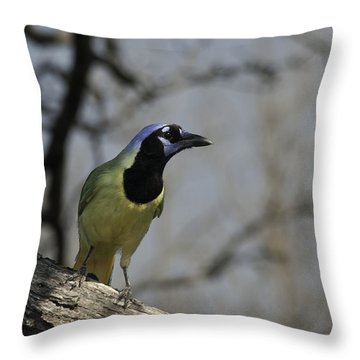 Throw Pillow featuring the photograph Green Jay by Betty Depee