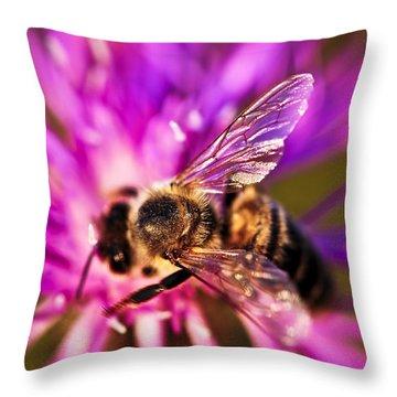 Honey Bee  Throw Pillow by Elena Elisseeva