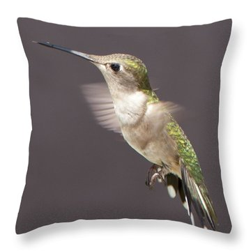 Hummingbird Throw Pillow by John Crothers