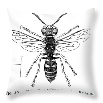 Insects: Wasps Throw Pillow by Granger