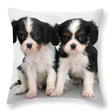 King Charles Spaniel Puppies Throw Pillow by Jane Burton