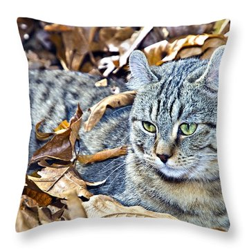 Throw Pillow featuring the photograph Kitten In Leaves by Susan Leggett