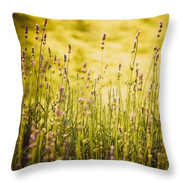 Lavender Gold Throw Pillow by Sara Frank