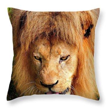 Lion Drinking Throw Pillow