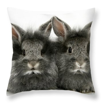 Lionhead Rabbits Throw Pillow by Jane Burton