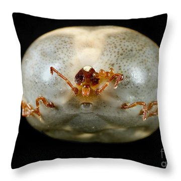 Lone Star Tick Throw Pillow