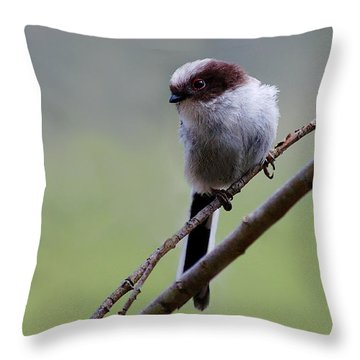 Long Tailed Tit Throw Pillow