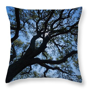 Looking Up Throw Pillow by Nicola Fiscarelli