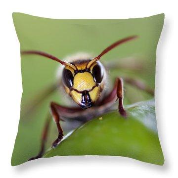 Hornet Photographs Throw Pillows