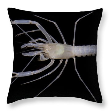 Mclanes Cave Crayfish Throw Pillow