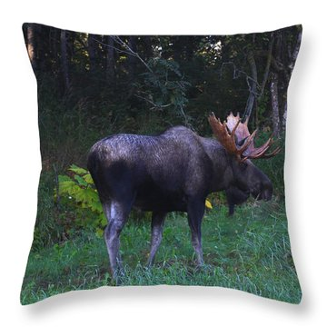 Throw Pillow featuring the photograph Morning Light by Doug Lloyd