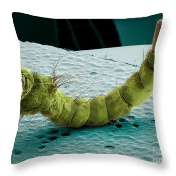 Mosquito Larva, Sem Throw Pillow by Ted Kinsman