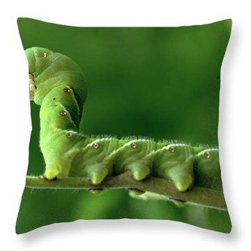 Munch A Bunch Throw Pillow