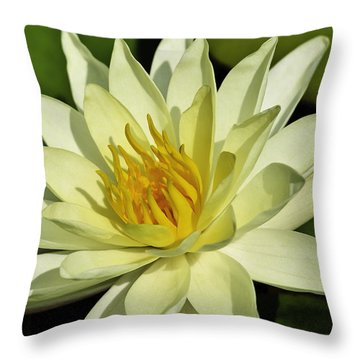 Nymphaea  Throw Pillow by Perla Copernik