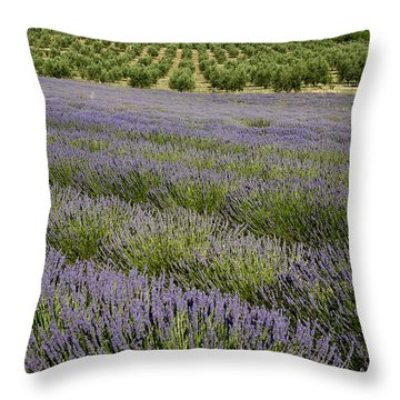 Olive Trees. Provence Throw Pillow by Bernard Jaubert