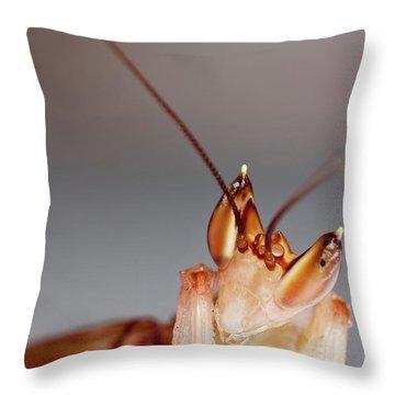 Orchid Praying Mantis Throw Pillow