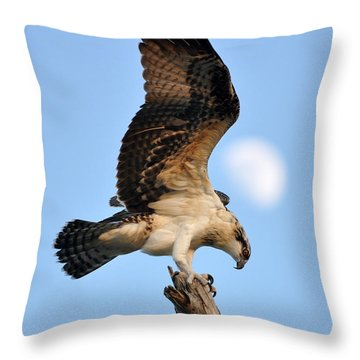 Osprey In Flight Throw Pillow by Rick Frost