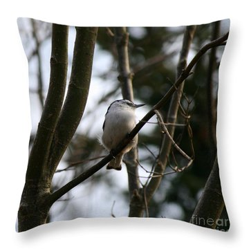 Perched And Content  Throw Pillow by Neal Eslinger