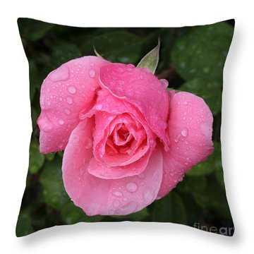Pink Rose Macro Shot With Rain Drops Throw Pillow