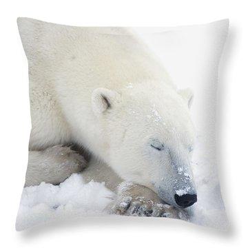 Polar Bear Ursus Maritimus Has His Eyes Throw Pillow by Richard Wear