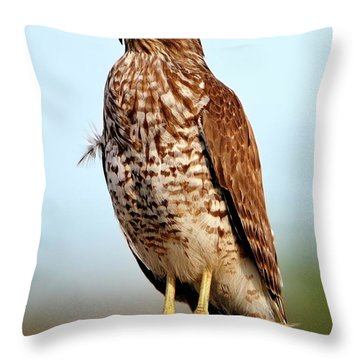 Portrait Of A Red Shouldered Hawk Throw Pillow