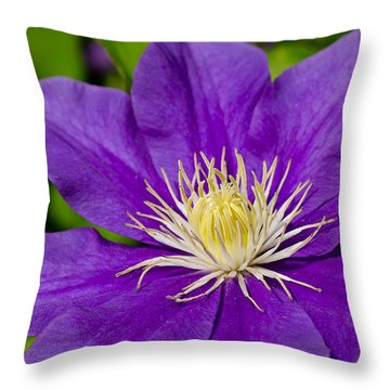 Purple Clematis Flower Throw Pillow