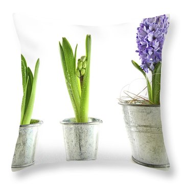 Purple Hyacinth In Garden Pots On White Throw Pillow by Sandra Cunningham