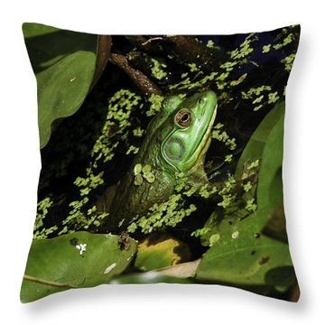Rana Clamitans Or Green Frog Throw Pillow by Perla Copernik