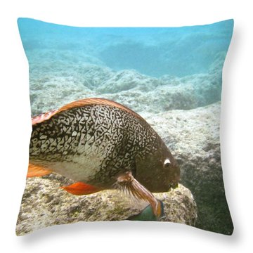 Redlip Parrotfish Throw Pillow by Michael Peychich