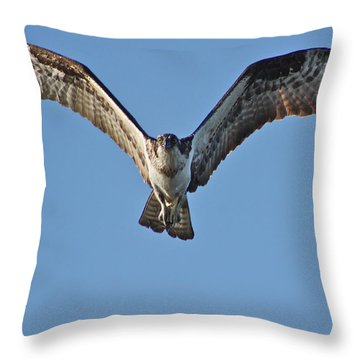 Throw Pillow featuring the photograph Remember To Soar by Cathie Douglas