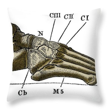 Right Foot Throw Pillow by Science Source