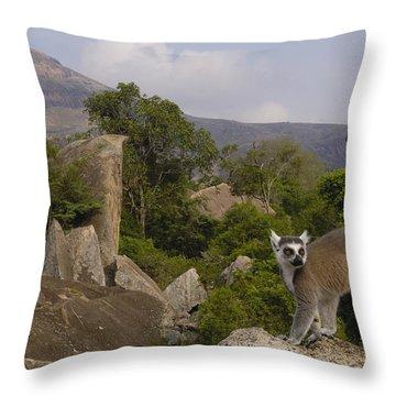 Ring-tailed Lemur Lemur Catta Portrait Throw Pillow by Pete Oxford