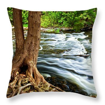 River Through Woods Throw Pillow by Elena Elisseeva